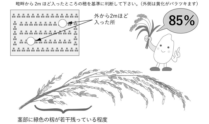 良品質米づくりの大敵「乳白米」の発生を防ぐには?
