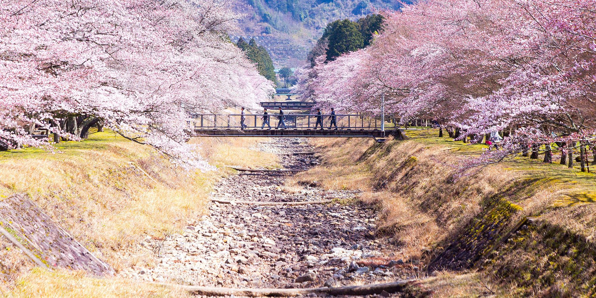 スライダー画像4桜
