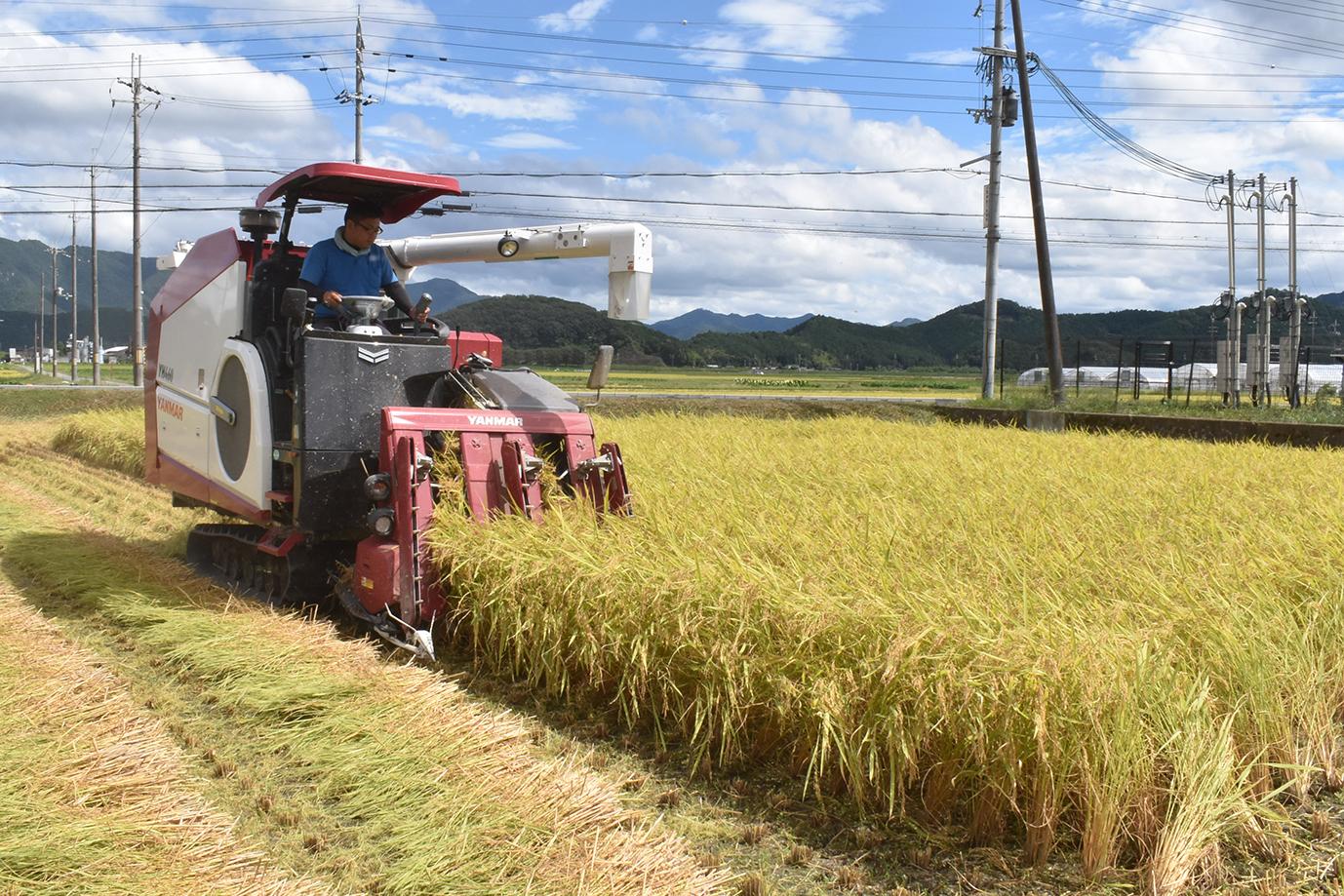 各地で稲刈り作業